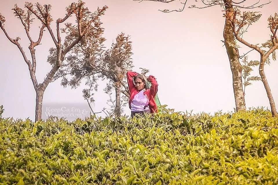 Lipton Tea Plantation (Haputale, Sri Lanka).