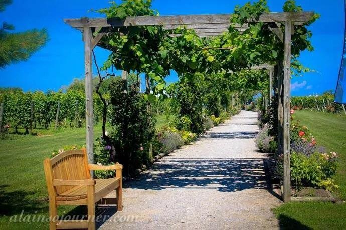 Pelee Island Winery 4