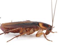 termitecontrolwollongong_srcset-large