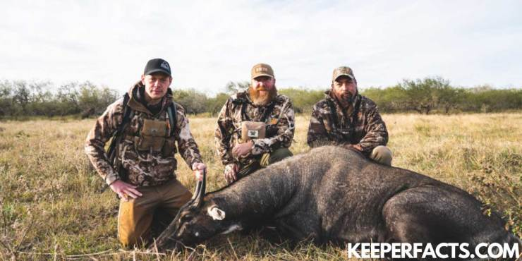 MeatEater Season 9: Release Date |  Trailer |  Delivery Details |  Ratings and Reviews