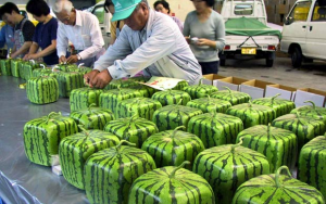 watermelons square production
