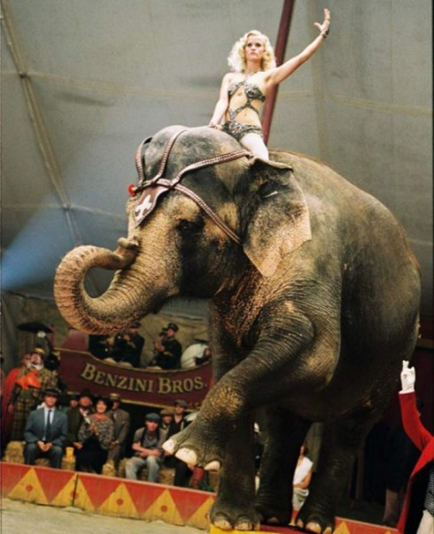 Disclaimer - Not a real circus elephant....this one's a famous actress.
