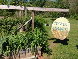Community garden beside Irwin Creek. Photo: Mary Newsom