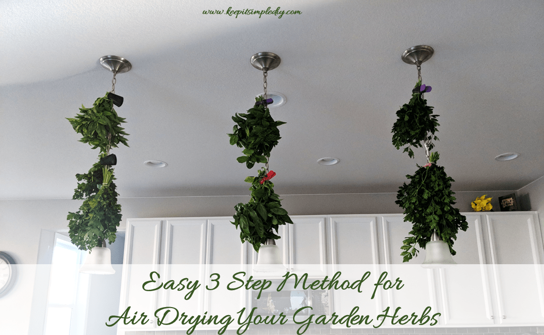 Drying-Garden-Herbs