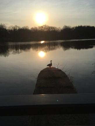 Sunrise at Shaker Lake (4/13/17)