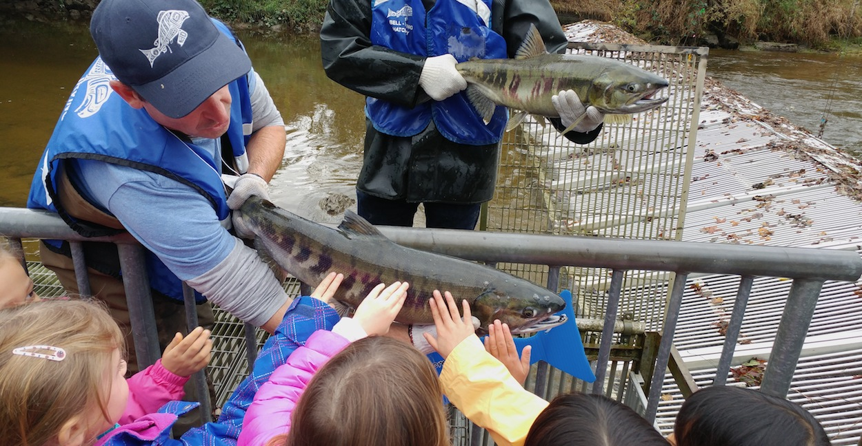 education programs Touch the salmon