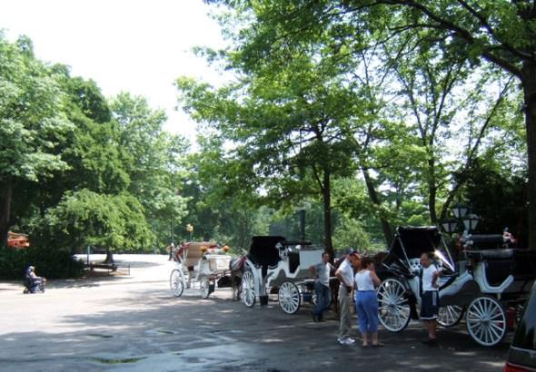 New York buggy rides