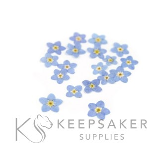 blue forget me nots flat shaped