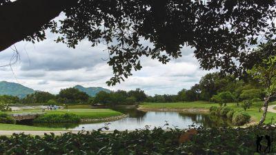 Springfield Golf Club Wasserhindernis und Baeume