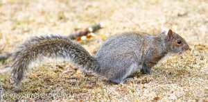 squirrel 1 (3 of 34)