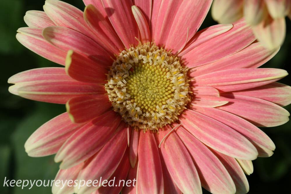 macro walk- flowers (14 of 26)