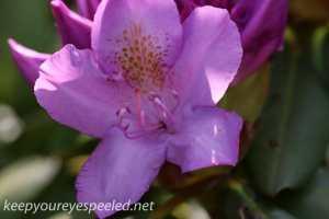 macro walk- flowers (18 of 26)