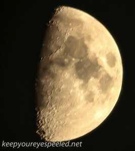 quarter moon (1 of 1)