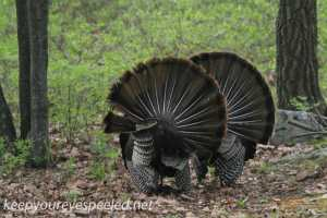 turkey (15 of 16)