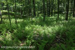 Bear Creek preserve  (41 of 59)