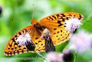 macro railroad butterfly 009 (1 of 1)