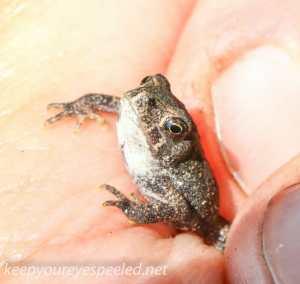 macro toad (1 of 1)