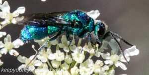macro wasp  240 (1 of 1)