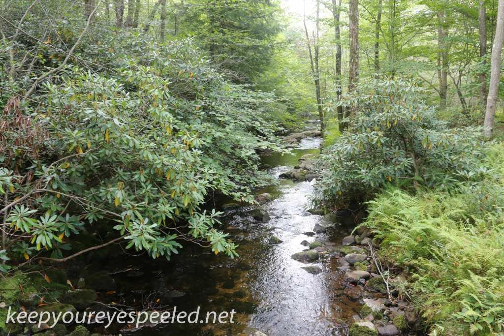 Bear Creek Preserve (7 of 39)