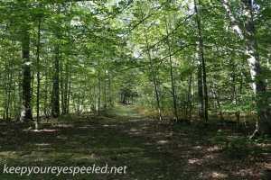 Nescopeck  State park  (4 of 36)