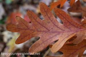 Fall hike (13 of 26)