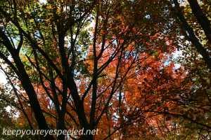 Fall hike (9 of 26)