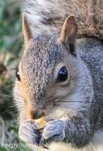 Fall walk squirrel 09 (1 of 1)