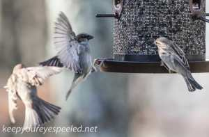 backyard feeder 112 (1 of 1)