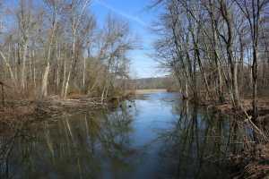 PPL Wetlands -4