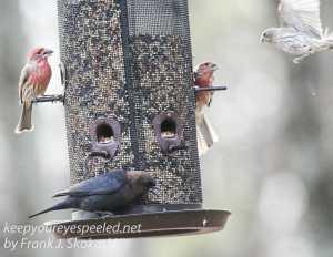 back yard birds-28