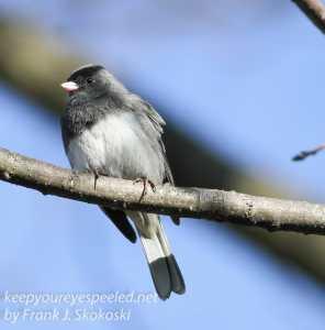 back yard birds-4