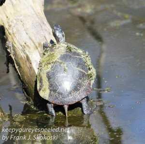 PPL Wetlands critters -15