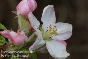 Macro flowers -14