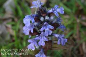 Macro flowers -36