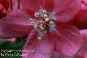 Macro flowers -4