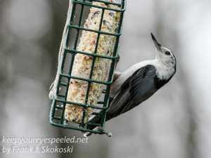 back yard feeders -1