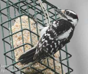 back yard feeders -31