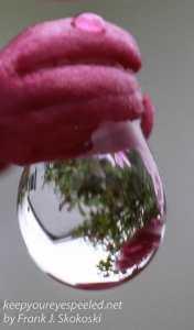 raindrops 2-3