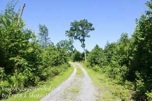 Weiser State Forest -40