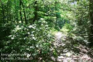 Weiser State Forest -42