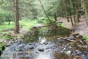 roaring creek hike -22