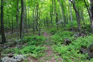 roaring creek hike -27