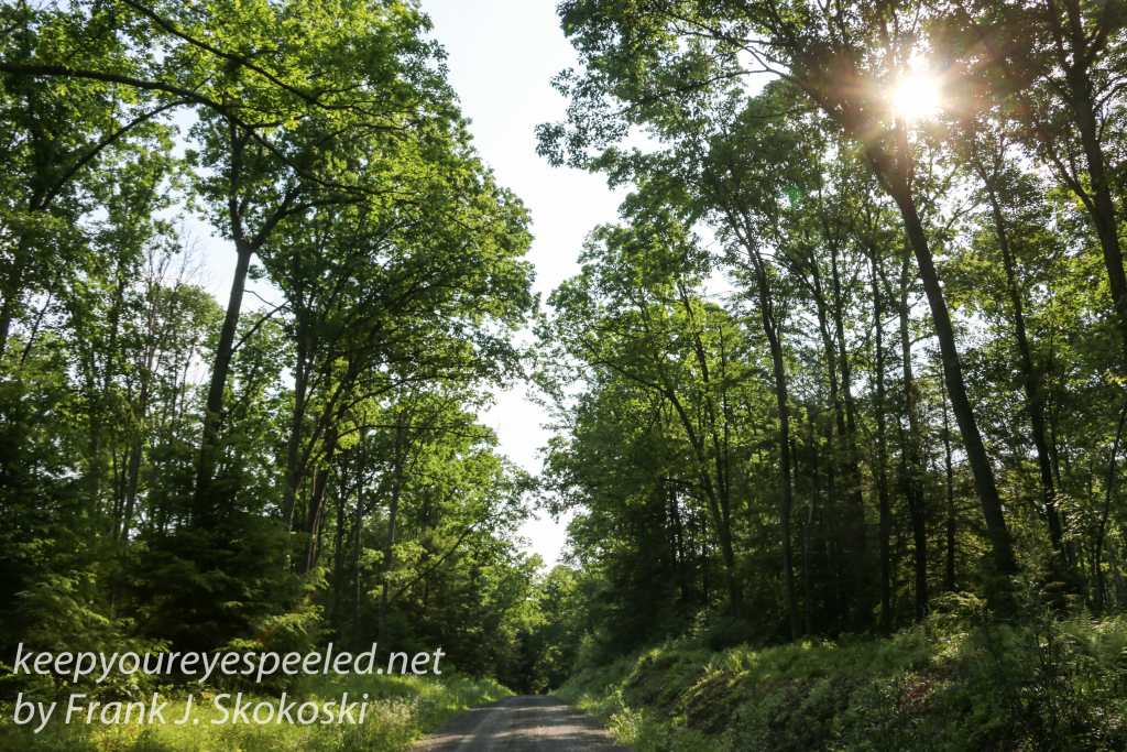 roaring creek hike -38