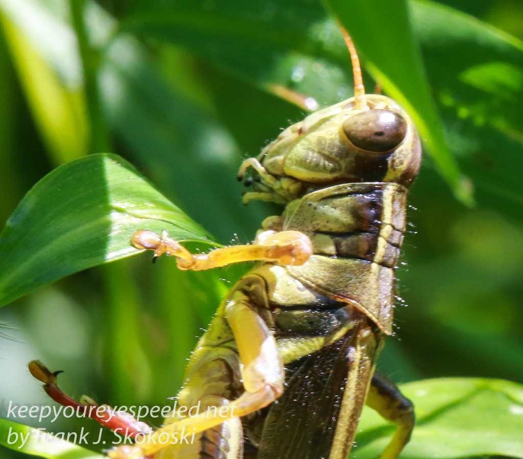 Insects -3
