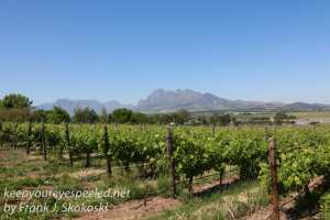 south-africa-wine-country-drive-7