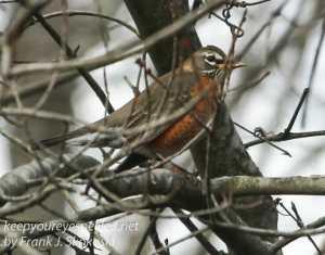 ppl-wetlands-birds-1