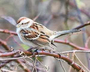 ppl-wetlands-birds-11