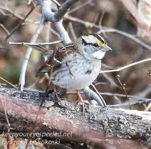 ppl-wetlands-birds-14