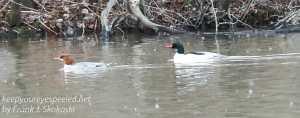 PPL Wetlands-18
