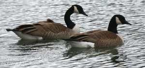 PPL Wetlands-25